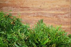 Stone age wall and trees close-up background Stock Photo