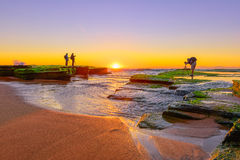 Stone with algae on Narrabeen Beach at sunrise. In Sydney Australia Royalty Free Stock Images