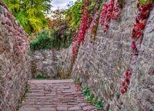 Stone alley between garden royalty free stock photos
