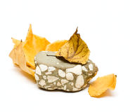Stone And Fall Leafs Stock Photos
