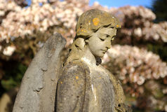 Stone angel against flowering tree. Royalty Free Stock Images