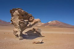 Stone of Arbol de piedra in the  desert of Siloli in Bolivia. Stone in the form of a tree of Arbol de piedra in the mountain desert of Siloli in Bolivia Stock Image