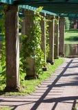 Stone arbor - the Pergola twined greens. Oranienbaum (Lomonosov). Upper park Stock Photography