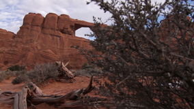 Stone Arch Reveal. The camera trucks right to left on a dolly/slider from behind a treet to reveal one of the many natrual stone Arches in Arches National Park stock footage