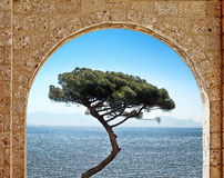 Stone arch and tree. View through the stone arch on stand-alone tree on the sea background Royalty Free Stock Photography