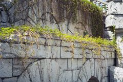 Stone arches braided with a vine of wild grapes with young leaves stock photo
