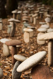 Stone artwork. Stone mushroom patch in forest Royalty Free Stock Image