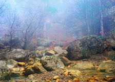 Stone and autumn wood. In dense fogs. Natural composition Stock Images