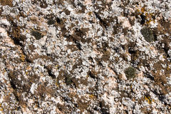 Stone background. In a mountain Stock Photography