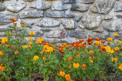Stone background with flowers royalty free stock photo