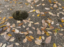 Stone background with leaves Stock Images