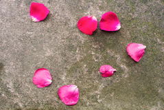Stone background with moss and fallen dark pink rose petals Royalty Free Stock Photos