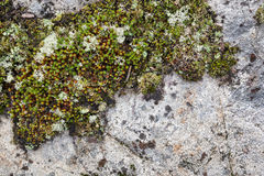 Stone background with moss Royalty Free Stock Photos