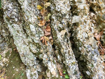 Stone background. At naturel place Royalty Free Stock Photography