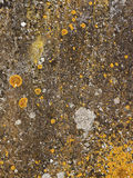 Stone background texture with lichens Stock Photos