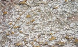 Stone background texture Royalty Free Stock Photo