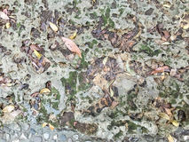 Stone background. Stone texture, outdoor floor, stone floor Stock Photos