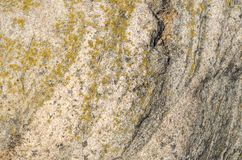 Stone background wall with crustose lichen texture Stock Photos