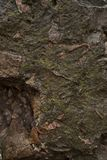 Stone background. wet wall after rain . stone texture stock photography