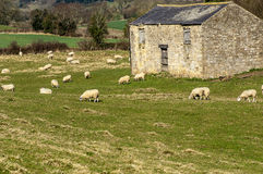 Stone barn Stock Image