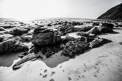 Stone on the beach Stock Photography