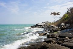 Stone beach with lonely tall tree Royalty Free Stock Image
