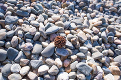 Stone Beach. Round brown seeds on stones Background, texture Royalty Free Stock Photography