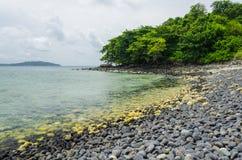 Stone beach with tree Stock Photos