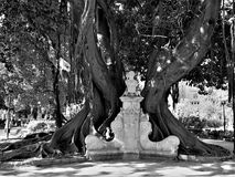 Stone bench with a beautiful tree. In a park of Valencia Spain stock image
