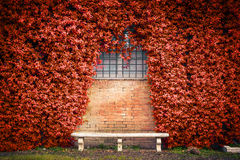 Stone bench and ivy background Royalty Free Stock Photography