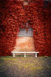 Stone bench and ivy background Stock Image