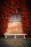 Stone bench and ivy background Royalty Free Stock Photos