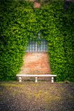Stone bench and ivy background Royalty Free Stock Images