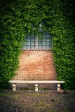 Stone bench and ivy background Stock Photos