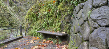 Stone Bench on Oneonta Gorge Trail Panorama Stock Photo