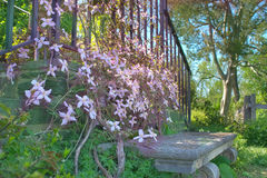 Stone bench and pink flowers Royalty Free Stock Photo