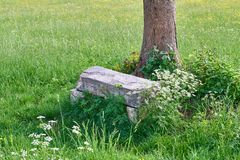 Stone Bench Under A Tree In Green Spring Nature. Stone Bench Under A Tree Outside In Green Spring Nature royalty free stock images