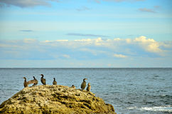 The stone with a birds on the background of the sea,  clouds on a blue sky, Crimea Royalty Free Stock Photos