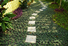 The Stone block walk path in the garden Stock Photography
