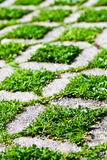 Stone block walk path with green grass Royalty Free Stock Image