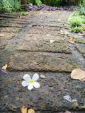 The Stone block walk path in the park. Thailand Royalty Free Stock Photography