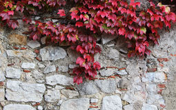 Stone blocks old wall, with leaves unpon it. A view of an ancient stone wall, with some red leaves upon it, landscape cut Royalty Free Stock Photo