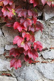 Stone blocks old wall, with leaves unpon it Stock Photo