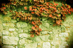 Stone blocks old wall, with leaves unpon it. A view of an ancient stone wall, with some red leaves upon it, vintage style picture, landscape cut Royalty Free Stock Images