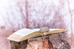 Stone on a Book royalty free stock image