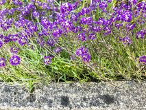 Stone border and lilac flowers royalty free stock photo