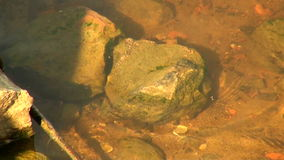 The stone at the bottom of the river stock video footage