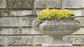 Stone bowl with flowers. On the background wall Royalty Free Stock Image