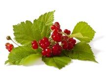Stone Bramble berry Stock Image