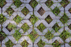 Stone brick on the ground with grass. Green grass sprouting through the diamond holes in grey stone bricks Royalty Free Stock Image